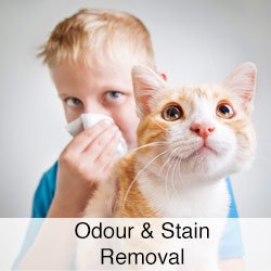 Odor and Stain Removal